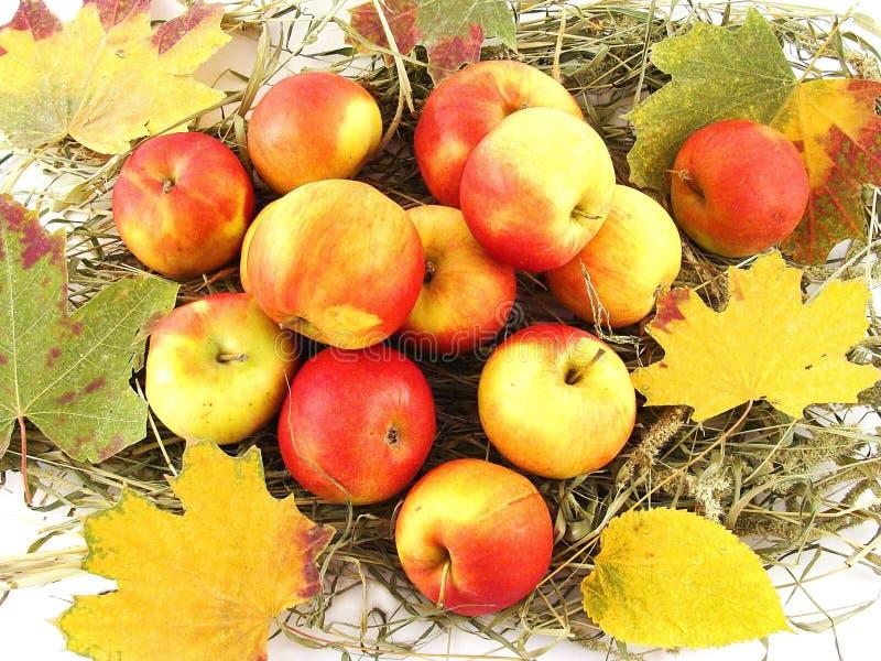 Download Arranjo do outono imagem de stock. Imagem de maçãs, bordo - 12806419