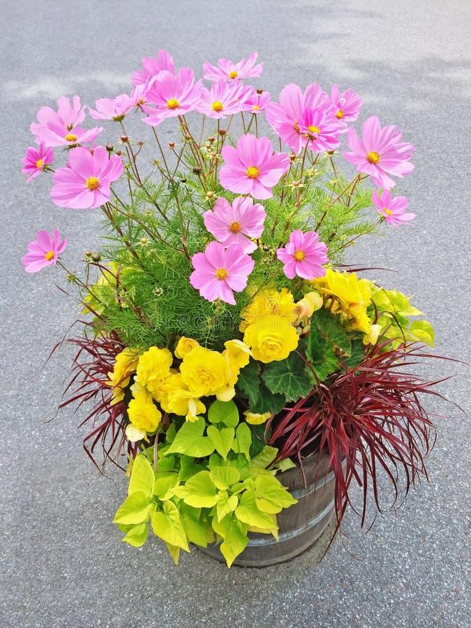 Arranjo floral com begônias e flores do cosmos imagens de stock royalty free