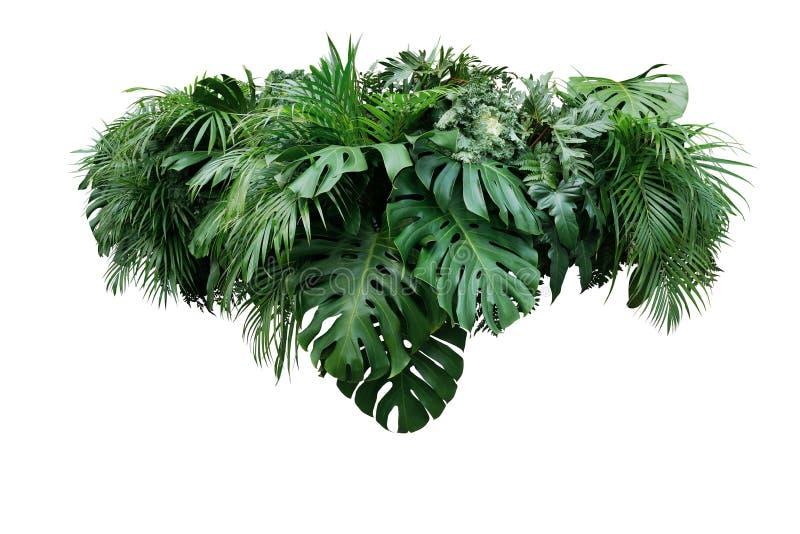 Arranjo floral do arbusto tropical da selva da planta da folha das folhas nat fotografia de stock