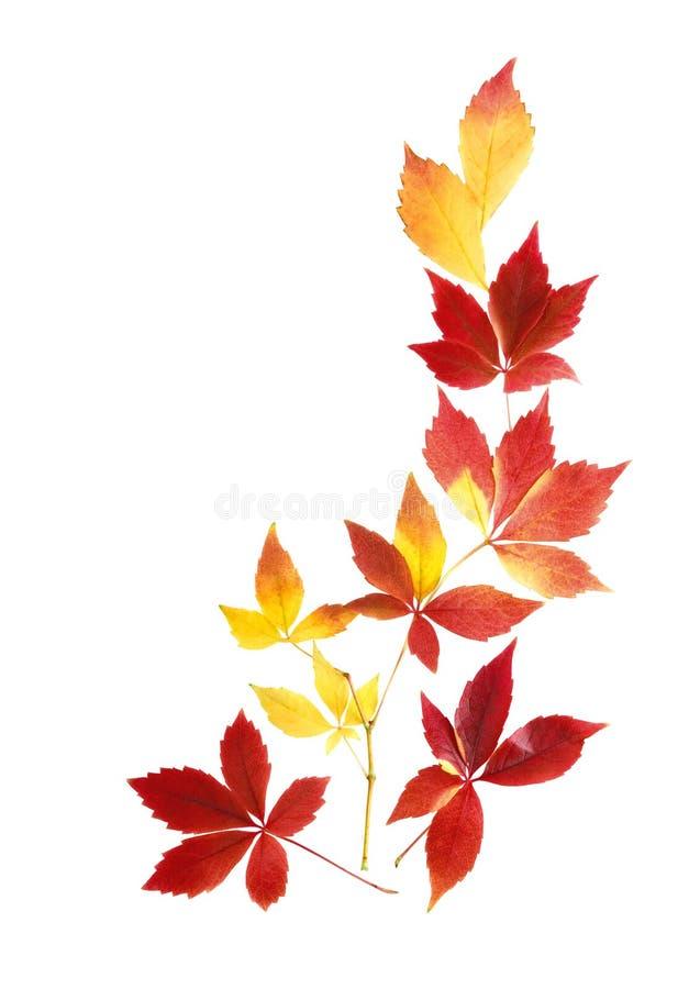Arranjo puro das folhas de outono imagem de stock royalty free