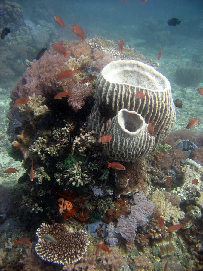 Arranjo submarino vertical de grandes corais brancos tipo jarra num recife de coral fotografia de stock