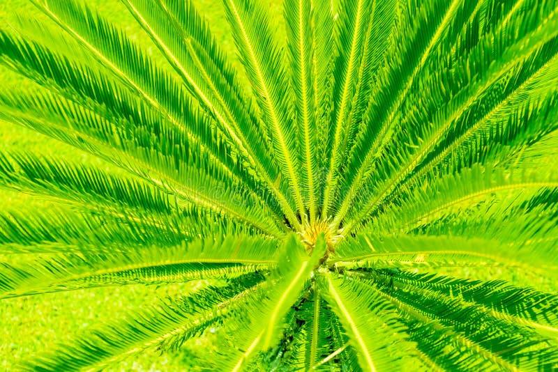 Arranjo tropical criativo das folhas de palmeira iluminado com luz verde do UFO Conceito criativo do partido da noite do entusias imagens de stock