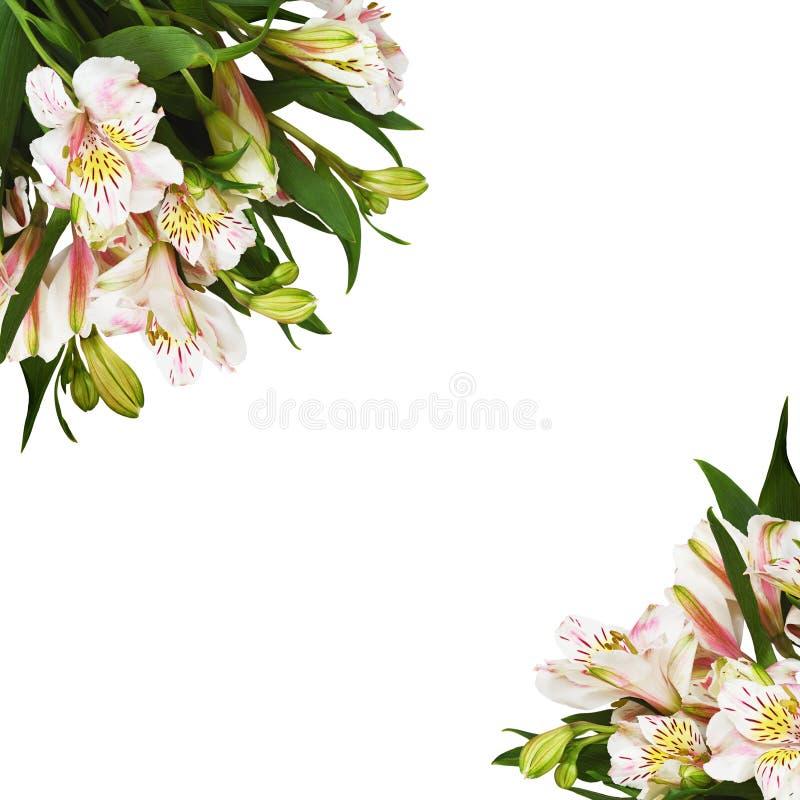 Arranjos de canto com flores do alstroemeria imagem de stock