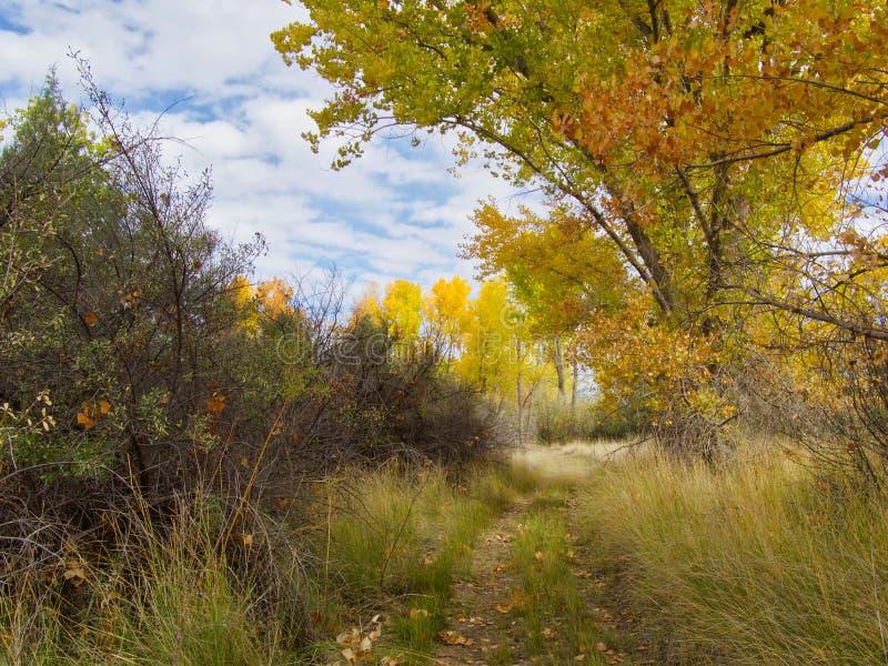 Arraste em Autumn Splendor imagens de stock royalty free