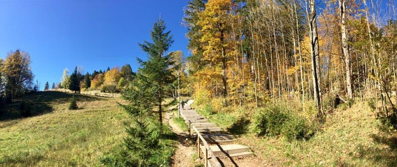Arraste para secar a floresta perto do Lechfall, Alemanha foto de stock royalty free