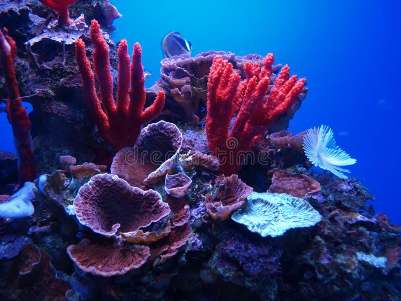 Arrecife de coral fotografía de archivo libre de regalías