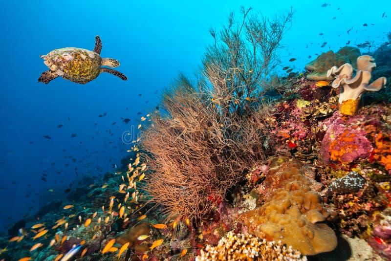 Arrecife de coral con la tortuga fotografía de archivo