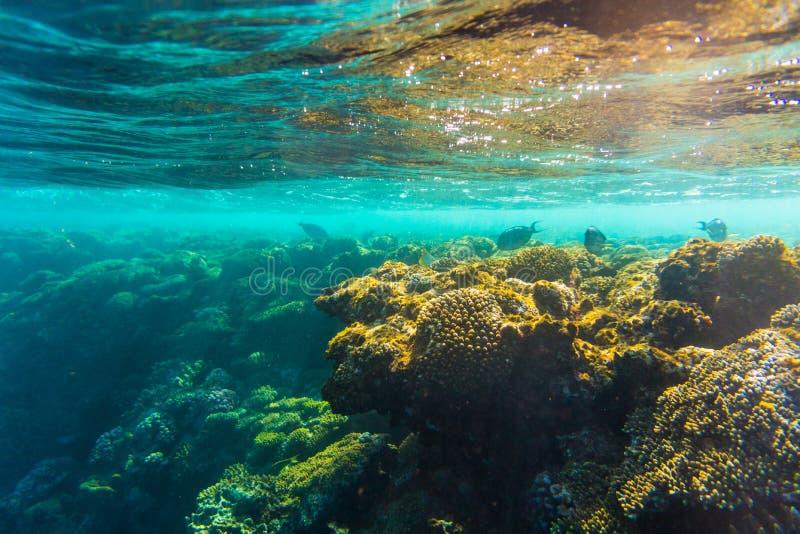 Arrecife de coral con los corales duros, foto subacuática del Mar Rojo de los pescados fotografía de archivo libre de regalías