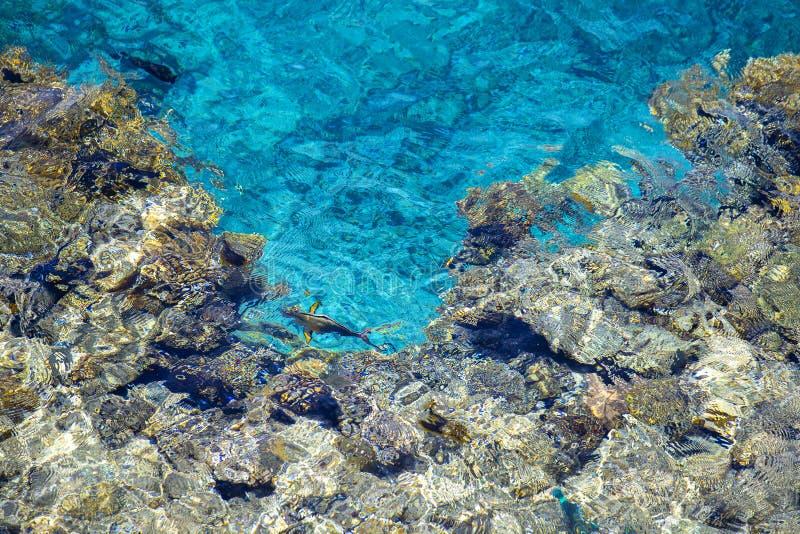 Arrecife de coral del Mar Rojo con los corales duros, los pescados y agua magra en Sharm el Sheikh, Egipto fotografía de archivo