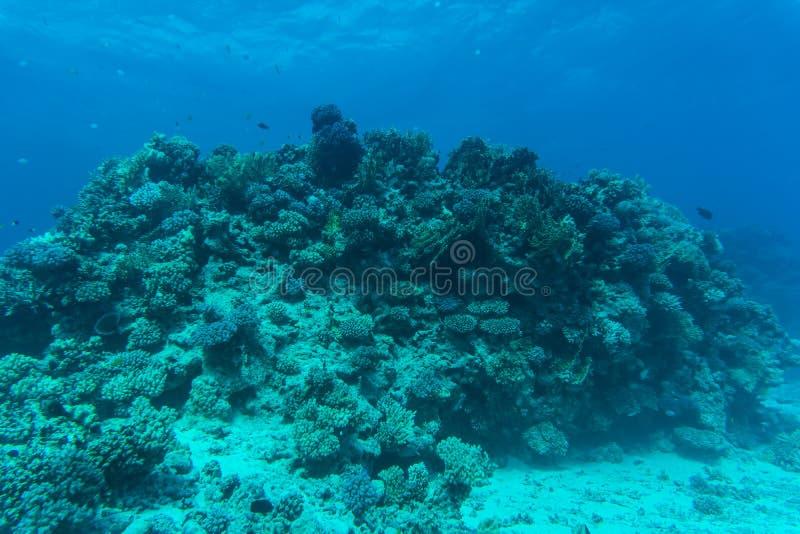 Arrecife de coral del Mar Rojo con los corales duros, los pescados y el cielo soleado brillando a través del agua potable bajo el imagen de archivo libre de regalías