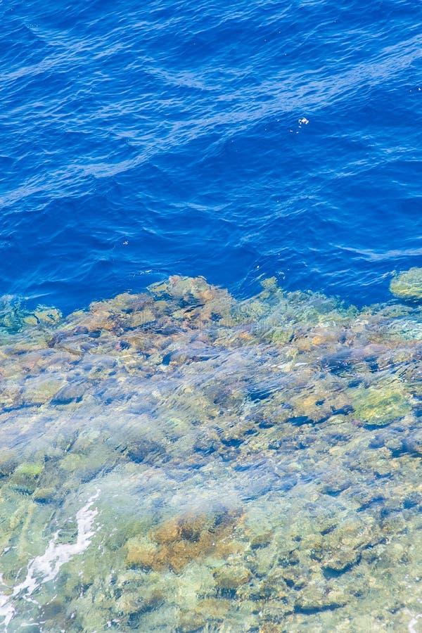 Arrecife de coral del Mar Rojo con los corales duros a través del agua potable imagenes de archivo
