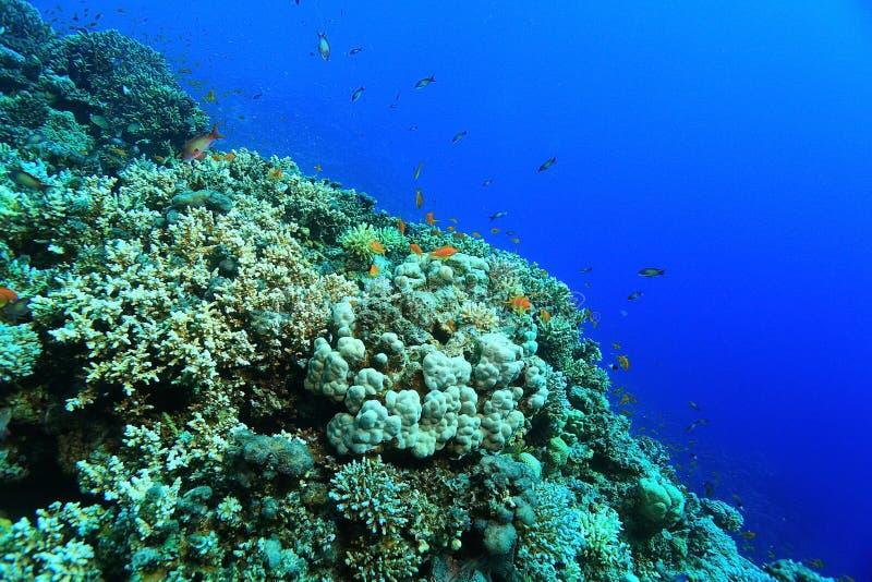 Arrecife de coral en el mar fotografía de archivo