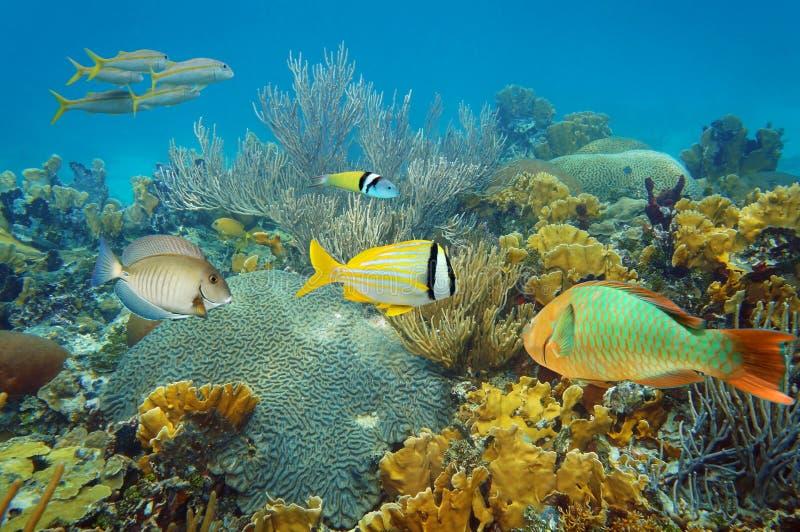 Arrecife de coral subacuático con los pescados tropicales coloridos imagen de archivo