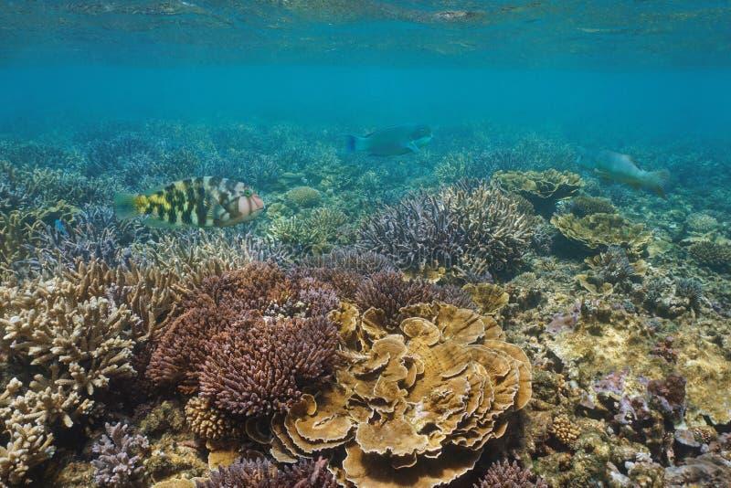 Arrecife de coral subacuático con los pescados tropicales Oceanía fotos de archivo libres de regalías