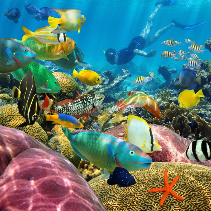 Arrecife de coral subacuático del hombre y pescados tropicales imágenes de archivo libres de regalías