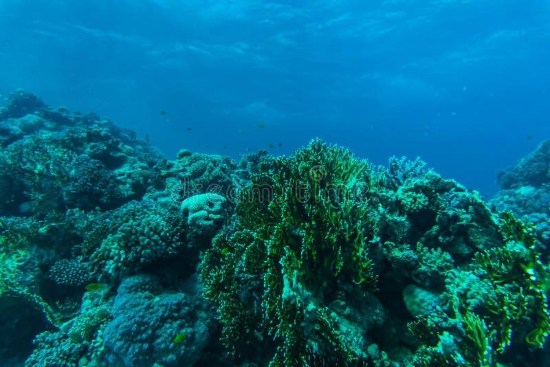 Arrecife de coral y pescados tropicales, vida marina Mar u océano subacuático foto de archivo libre de regalías