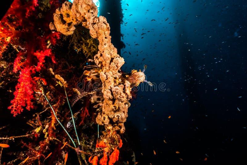 Arrecifes de coral y plantas de agua en los colores del Mar Rojo, coloridos y diversos imágenes de archivo libres de regalías