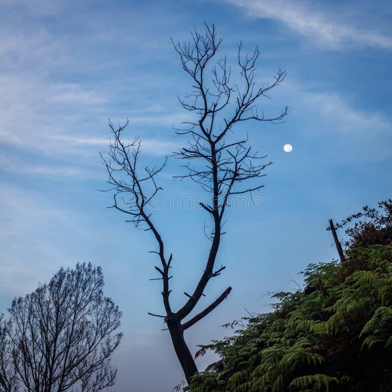 Arredores do vulcão de Ijen no amanhecer A silhueta da árvore em uma inclinação de uma montanha e o tolo moon foto de stock royalty free