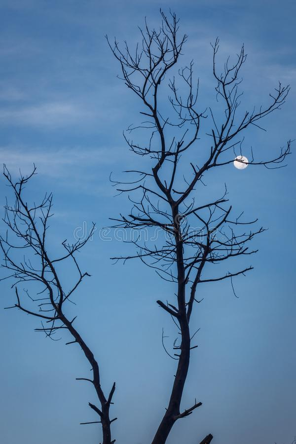 Arredores do vulcão de Ijen no amanhecer A silhueta da árvore em uma inclinação de uma montanha e o tolo moon Regência de Banyuwa foto de stock