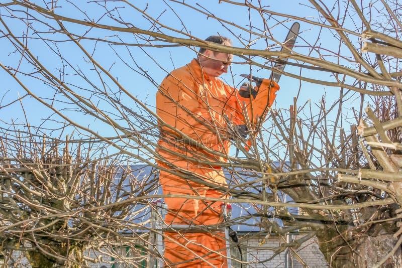 Arreglando el ?rbol con la sierra el?ctrica - trabajador de trabajo ambiental fotografía de archivo