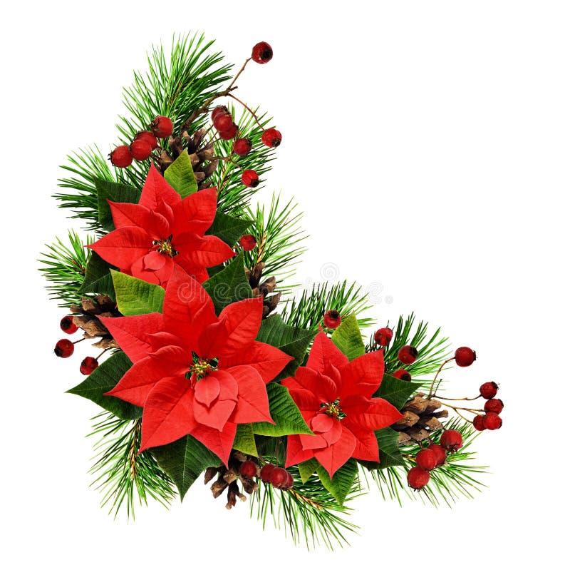 Arreglo de la Navidad con las ramitas, los conos, las bayas y el ponset del pino fotografía de archivo libre de regalías