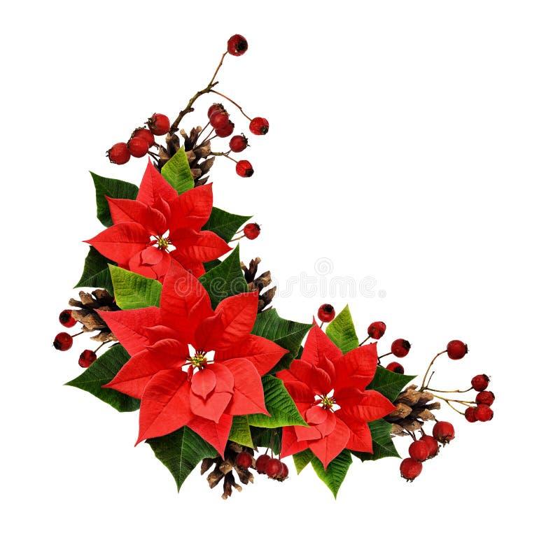 Arreglo de la Navidad con las ramitas, los conos, las bayas y el ponset del pino foto de archivo