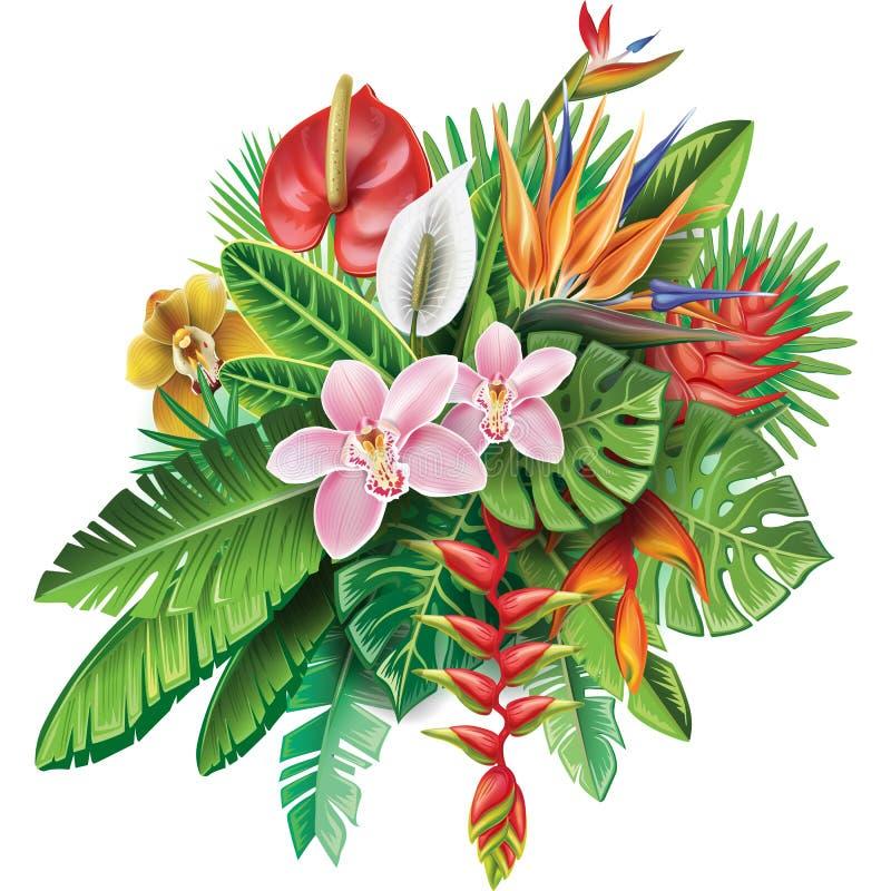 Arreglo de las plantas tropicales stock de ilustración
