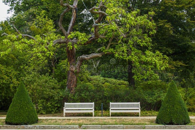 Arreglo del banco de parque en el jardín público imagen de archivo libre de regalías