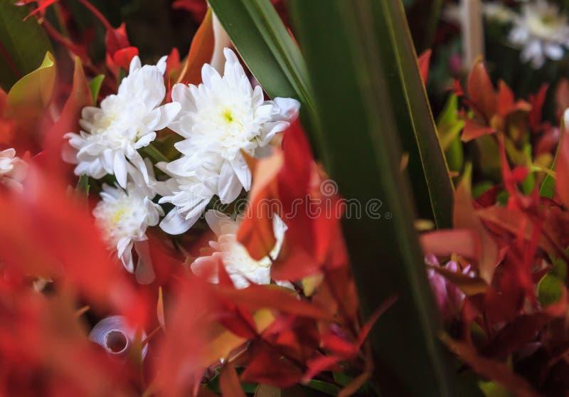 Arreglo ornamental floreciente natural blanco del ramo floral de la flor del crisantemo en fondo del florero Naturaleza, flora, a foto de archivo