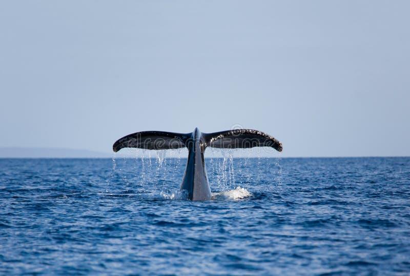 Arrière de baleine photographie stock libre de droits