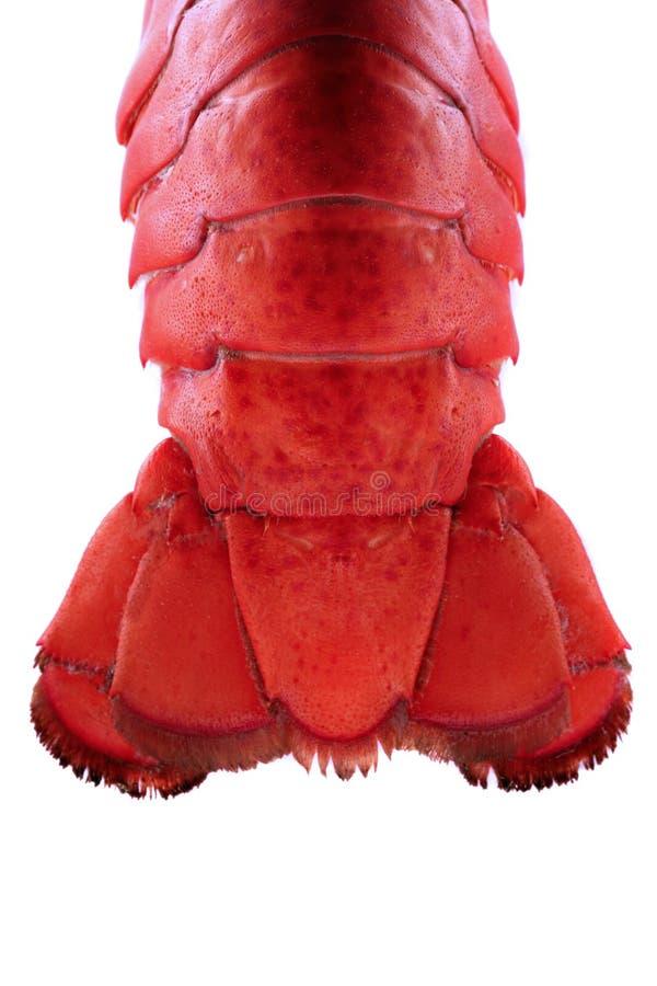 Arrière de langoustine - éclairé à contre-jour photo stock