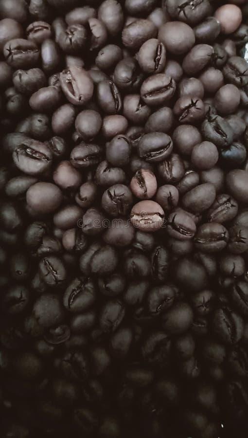 Arrière-plan brillant des grains de café brun frais en dégradé image stock