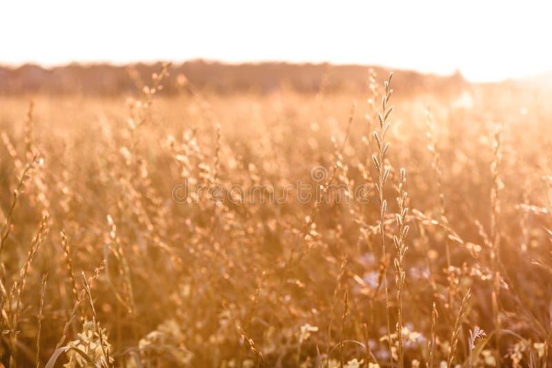 Arrière-plan d'automne par herbe sèche en automne sur le terrain Axe sélectif souple photographie stock