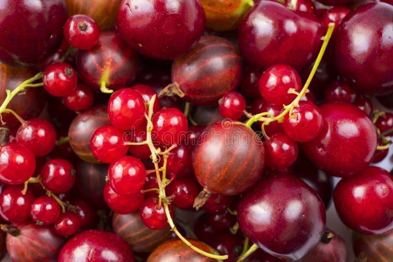 Arrière-plan des currys rouges, des gooseberries et des cerises Closeuse de fruits frais Vue supérieure Arrière-plan des baies ro photos stock