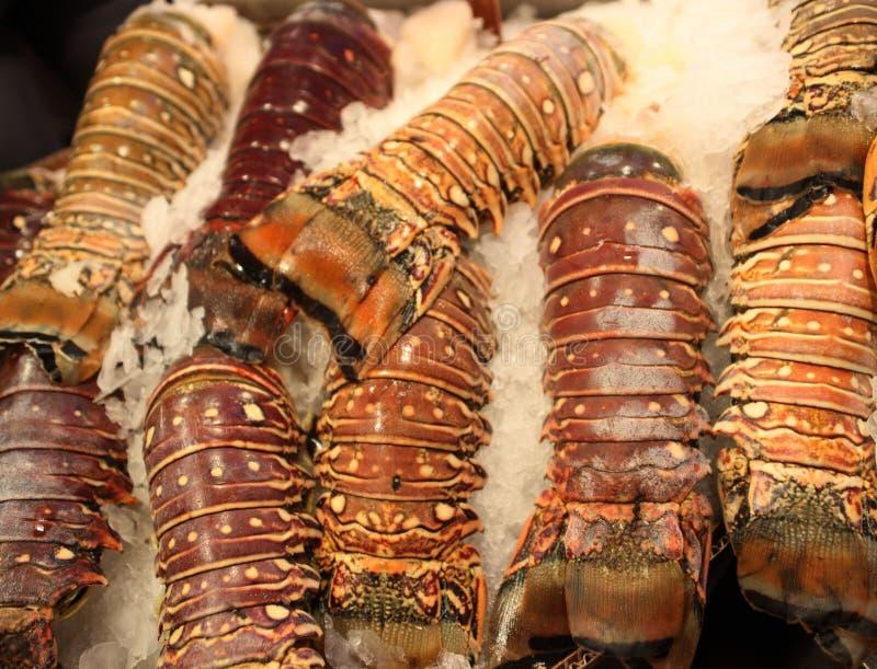 Arrières de homard photo libre de droits