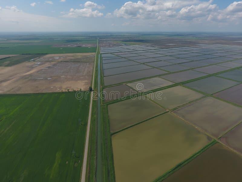 Arroces de arroz inundados Métodos agronómicos de producir el arroz en los campos fotos de archivo