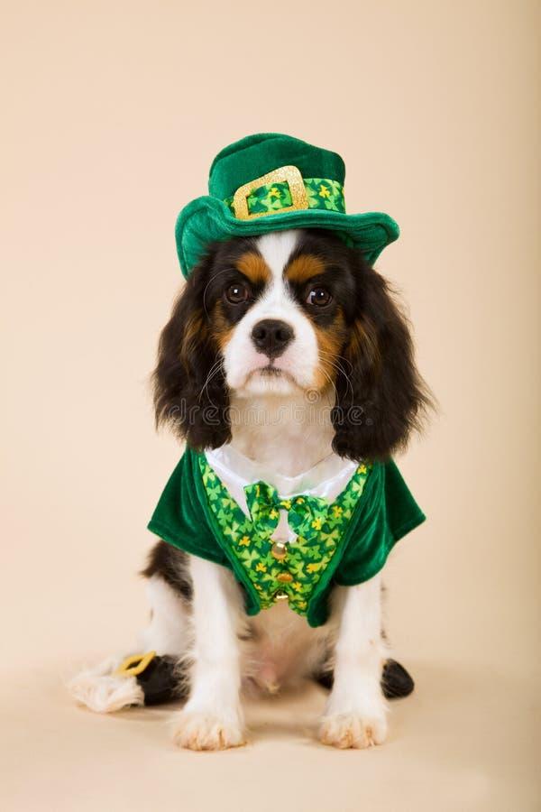 Arrogant puppy dat kabouteruitrusting draagt stock afbeelding