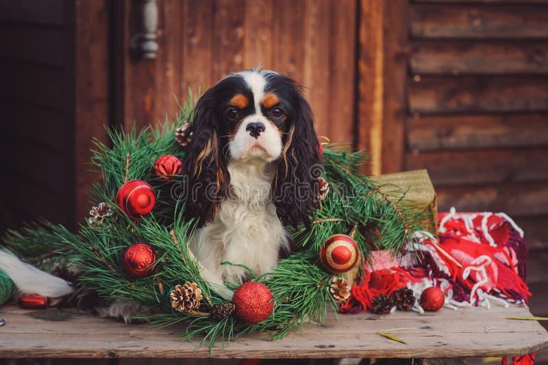 Arrogante het spanielhond van koningscharles met Kerstmisdecoratie bij comfortabel houten buitenhuis royalty-vrije stock foto