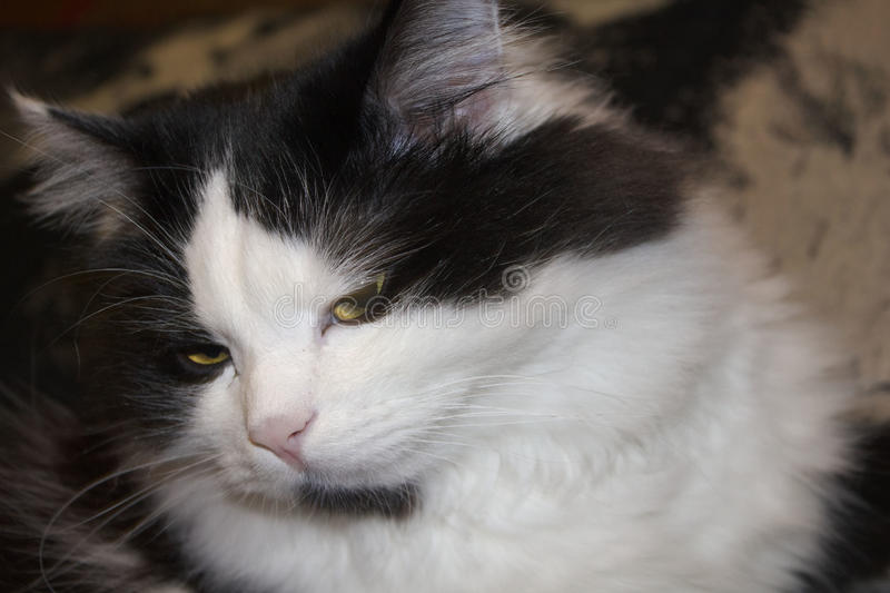 Arrogante Katze stockfotos