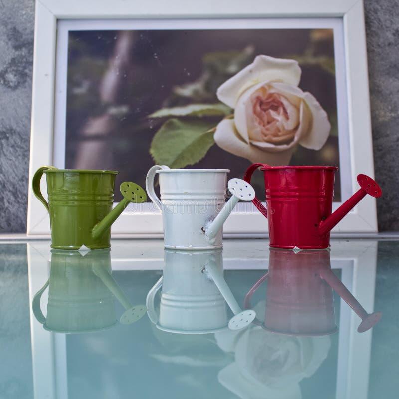 Arrosage de la PIC de rose photo stock