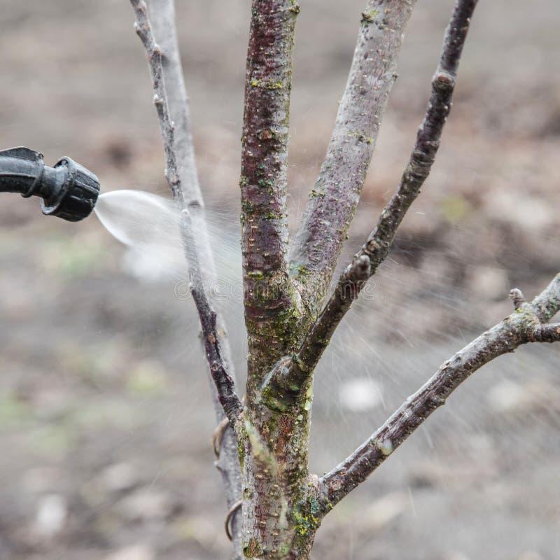 Arrosage des arbres avec du fongicide photos stock