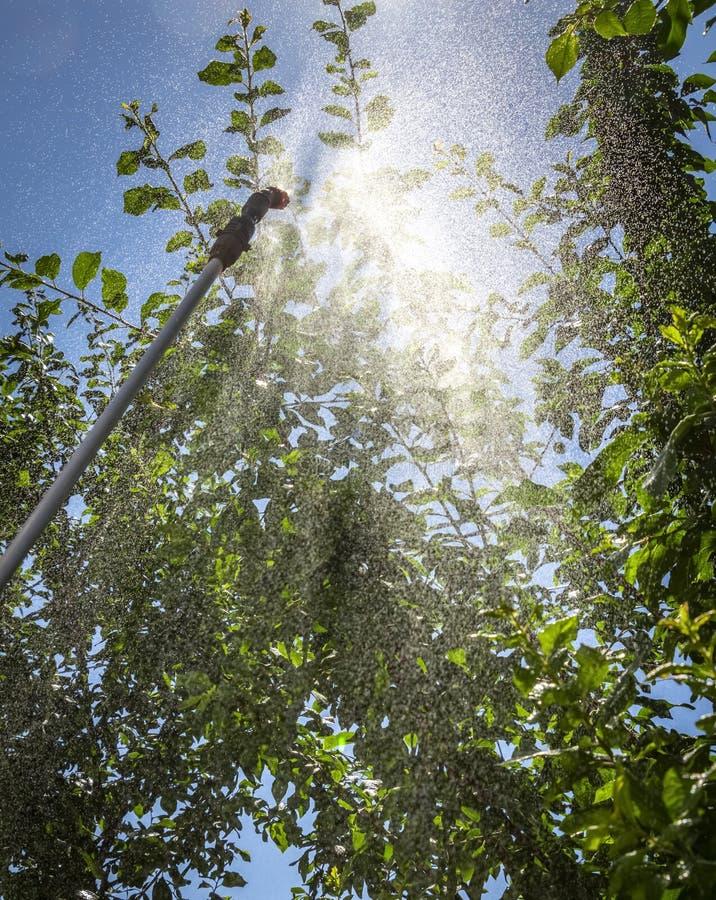 Arrosage des arbres photo libre de droits