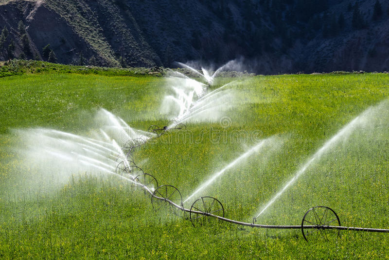 Arrosant, ligne irrigation par aspiration de roue images libres de droits