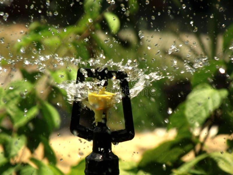 Arroseuse de jardin un jour ensoleillé d'été pendant l'arrosage photos stock