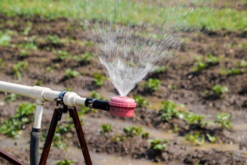 Arroseuse de l'eau pour arroser dans le jardin arrosage de jardin photos libres de droits