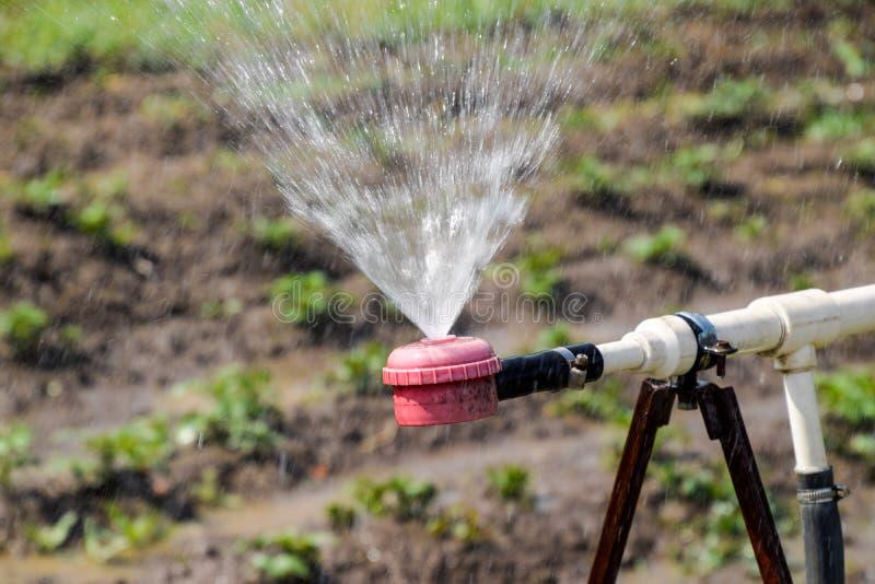Arroseuse de l'eau pour arroser dans le jardin arrosage de jardin photos stock