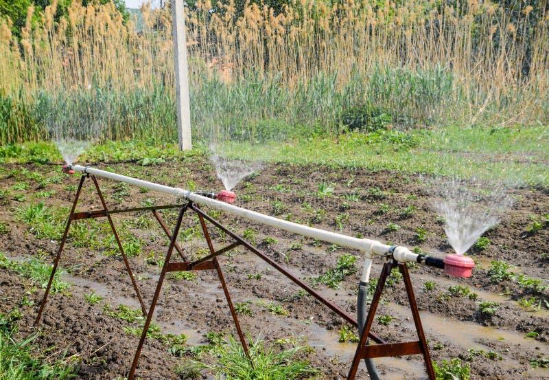 Arroseuse de l'eau pour arroser dans le jardin arrosage de jardin photographie stock