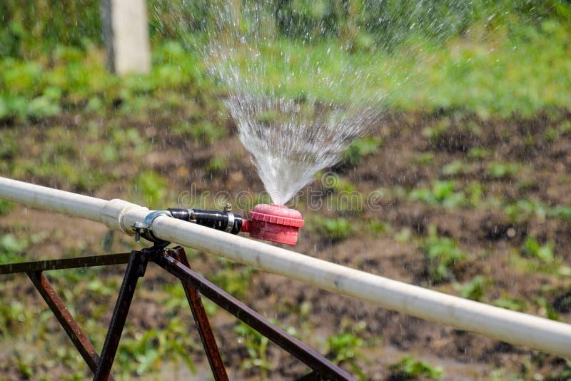 Arroseuse de l'eau pour arroser dans le jardin arrosage de jardin images libres de droits