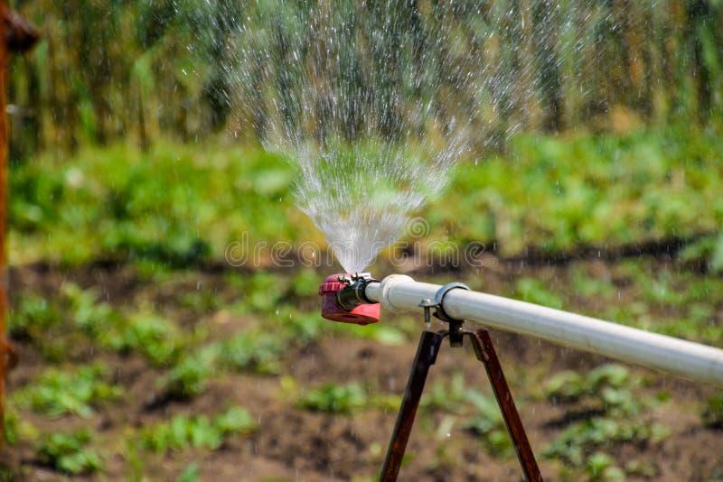 Arroseuse de l'eau pour arroser dans le jardin arrosage de jardin photo libre de droits