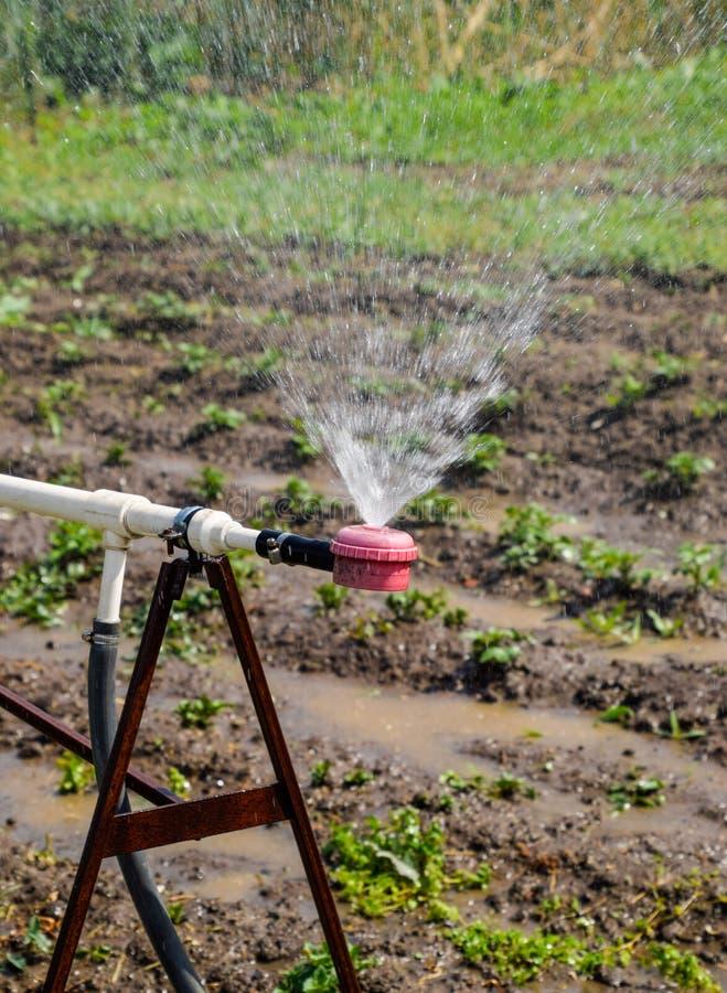 Arroseuse de l'eau pour arroser dans le jardin arrosage de jardin photographie stock libre de droits